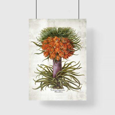 Kwiat cesarskiej korony - Plakat do biura