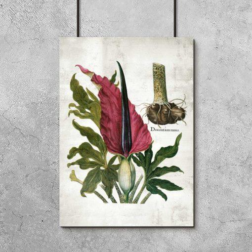 Naukowy plakat z łacińską nazwą rośliny