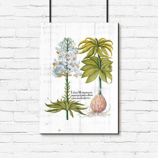 Plakat biała lilia