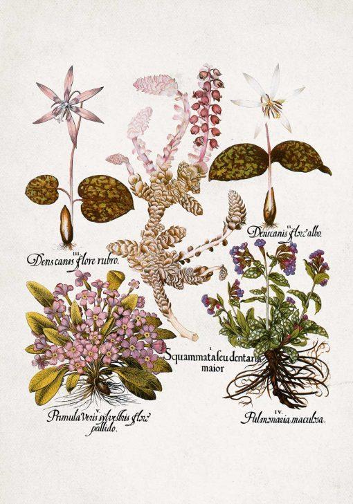 Plakat botaniczny z kwiatami ogrodowymi do jadalni