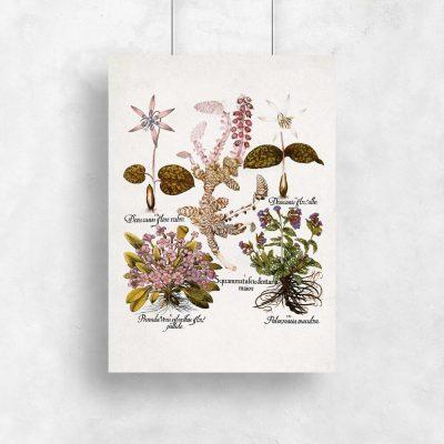 Plakat botaniczny z kwiatami ogrodowymi do kuchni