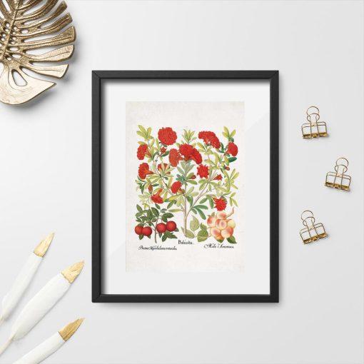 Plakat czerwone kwiaty i owoce do ozdoby szkoły