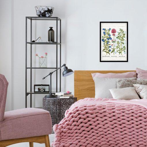 Plakat dydaktyczny z ostrogowcem czerwonym do sypialni