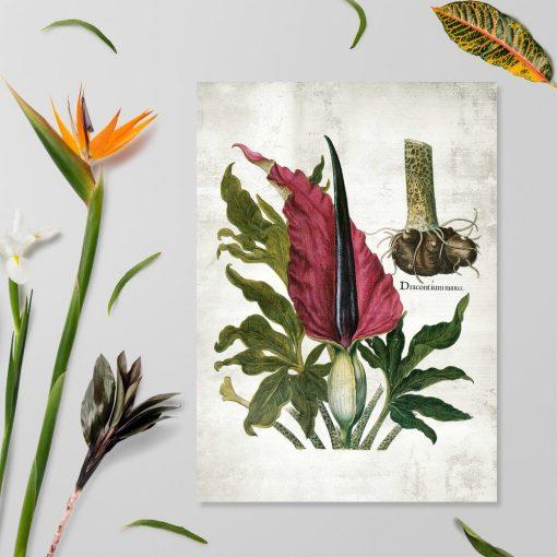 Plakat edukacyjny z leczniczą rośliną