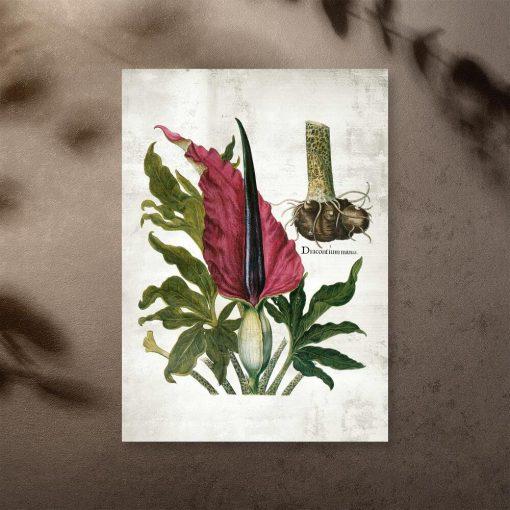 Plakat edukacyjny z naukową nazwą rośliny zielnej