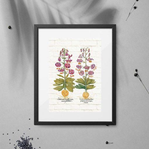 Plakat fioletowe lilie