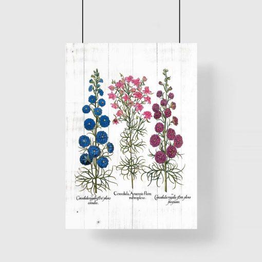Plakat gatunki roślin zielnych