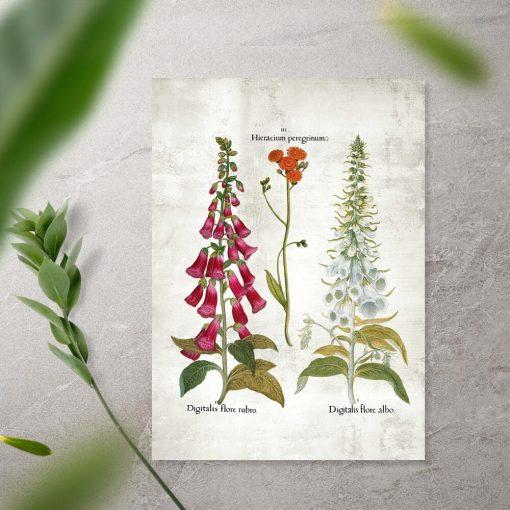 Plakat kwiaty ogrodowe