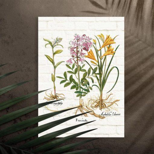 Plakat naukowy z roślinami