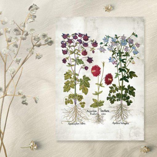 Plakat ogrodowe kwiaty