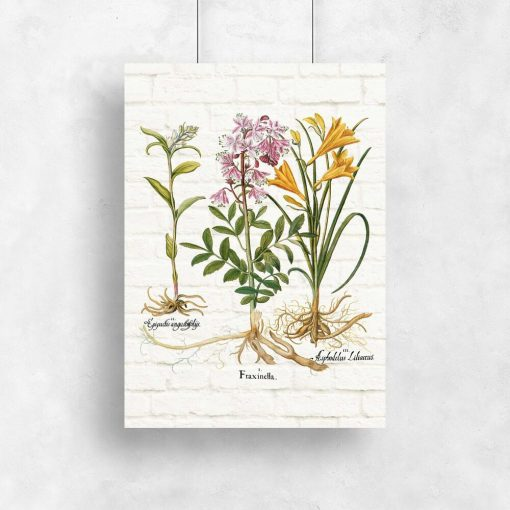Plakat rośliny i ich nazwy łacińskie