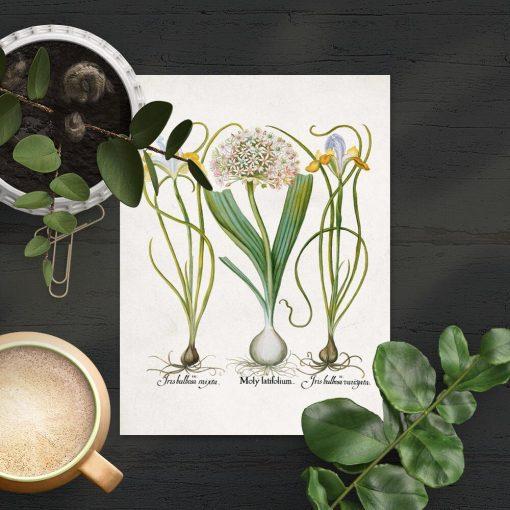 Plakat rośliny kwiatowe i łacińskie nazwy