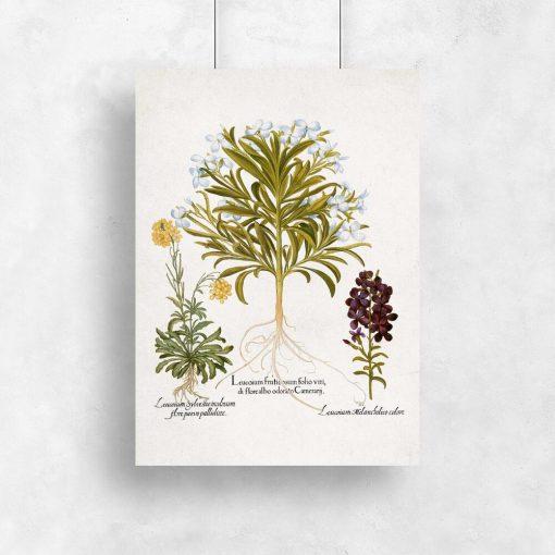 Plakat rośliny z kwiatuszkami