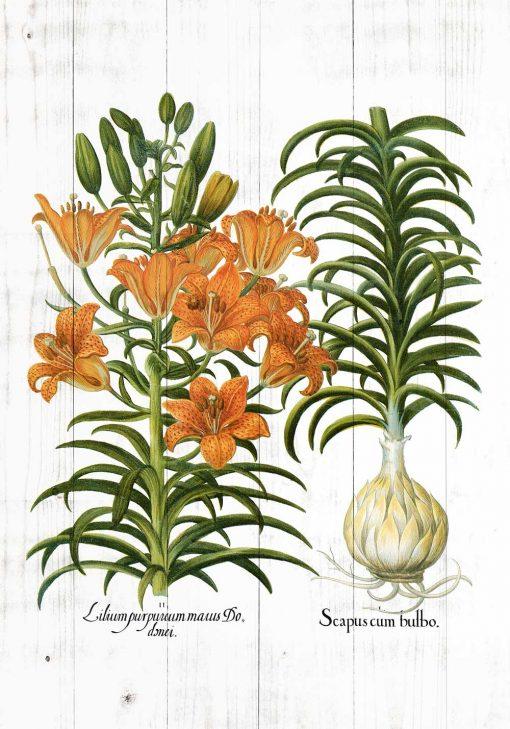 Plakat rustykalny z motywem lilii