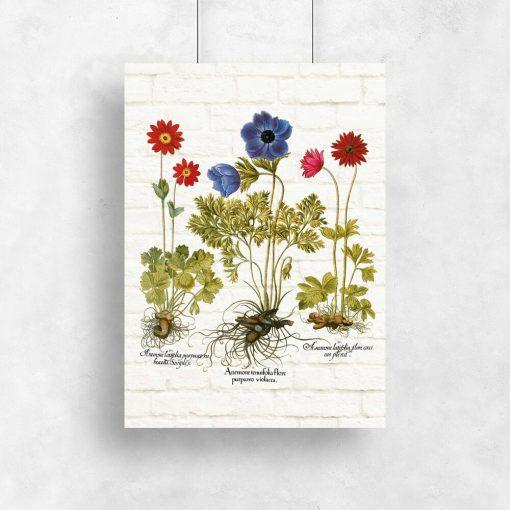 Plakat z anemonami i ich nazwami