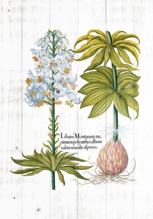 Plakat z białą lilią
