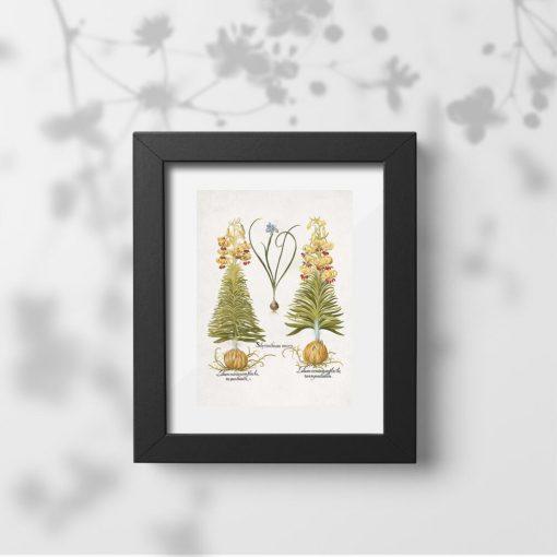 Plakat z cebulami roślinnymi