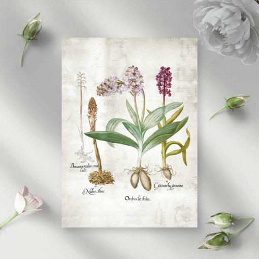 Plakat z gatunkami storczyków