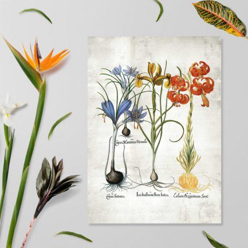Plakat z kwiatami cebulowymu