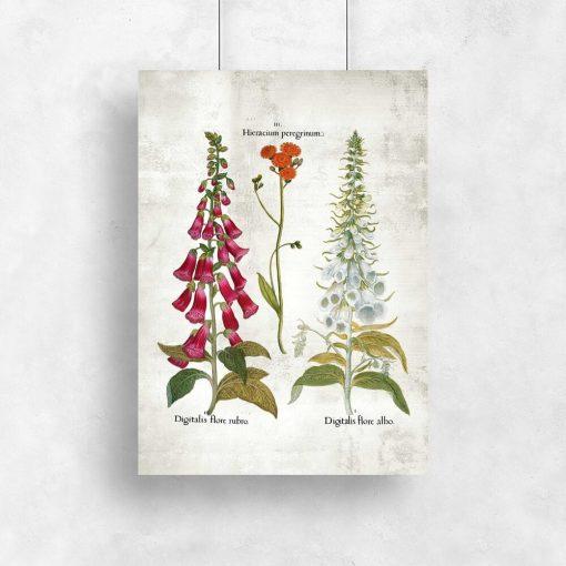Plakat z kwiatami dekoracyjnymi
