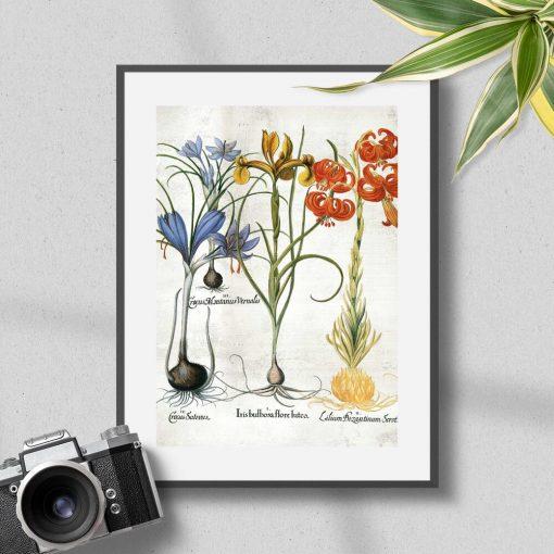 Plakat z kwiatami i ich cebulami