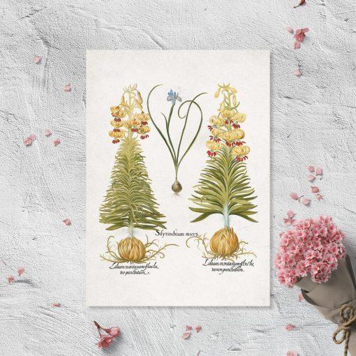 Plakat z kwiatami: irys i lilia
