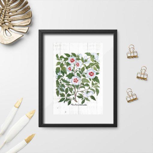 Plakat z kwiatami malwy