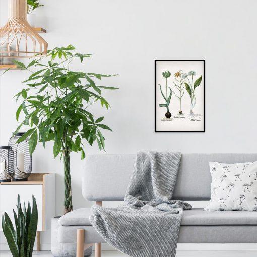 Plakat z kwiatem szachownicy cesarskiej do salonu