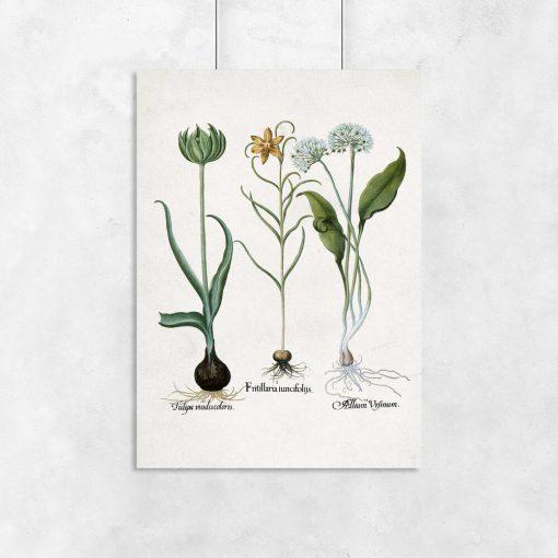 Plakat z kwiatem szachownicy cesarskiej na przedpokój