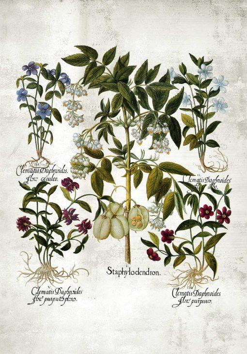 Plakat z kwiatkami dla florysty do kuchni