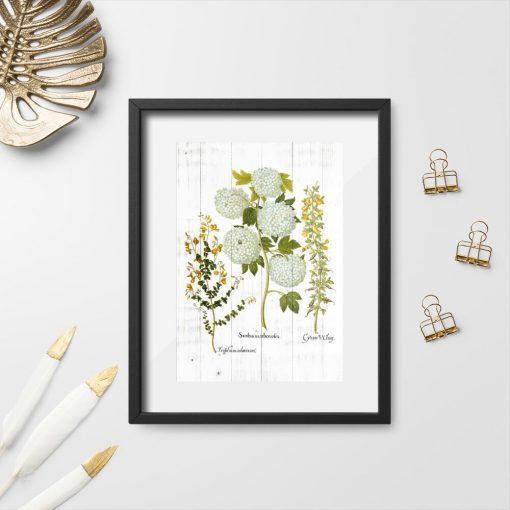 Plakat z kwiatostanem kaliny