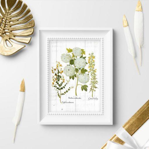 Plakat z kwiatostanem roślin