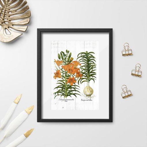 Plakat z łacińskimi nazwami lilii