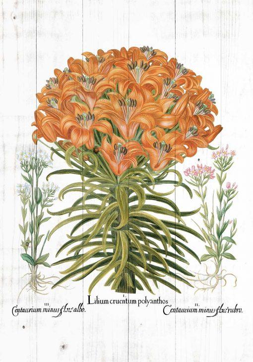 Plakat z lilia tygrysią do jadalni