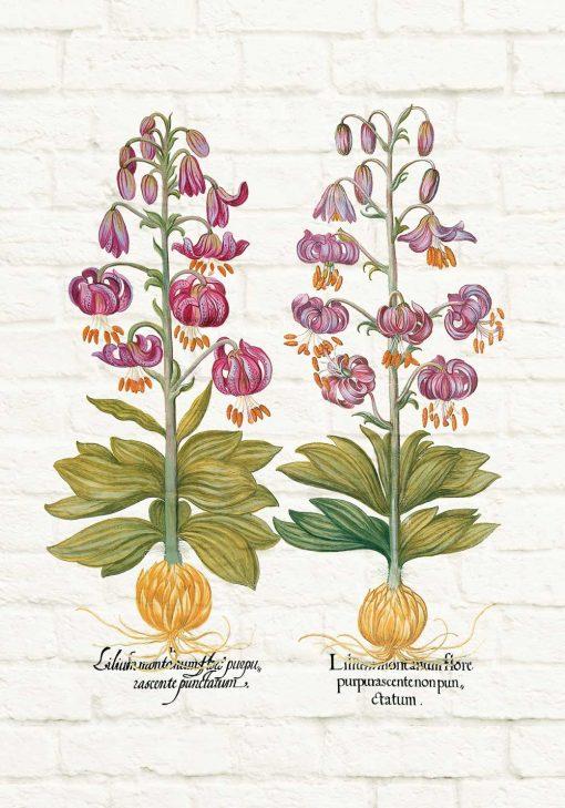 Plakat z motywem fioletowej lilii