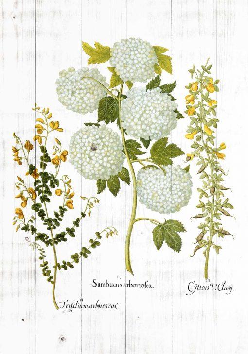 Plakat z motywem kwitnących roslin