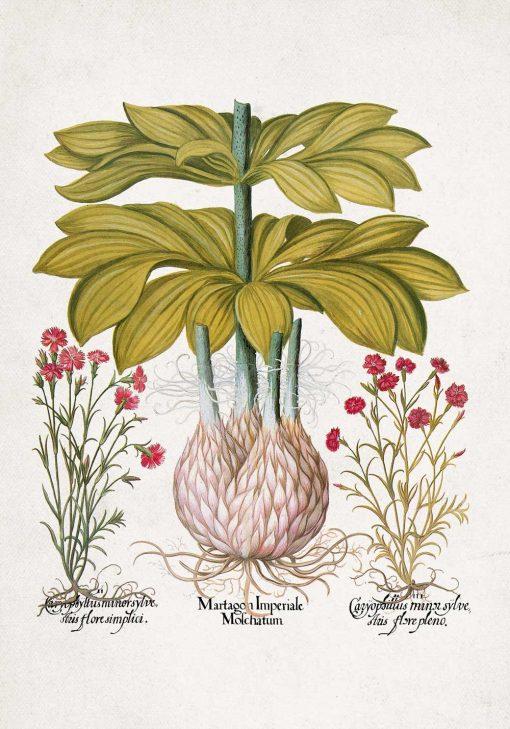 Plakat z motywem lilii