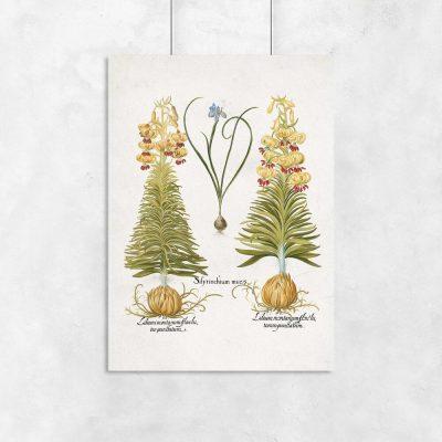 Plakat z motywem lilii i irysów