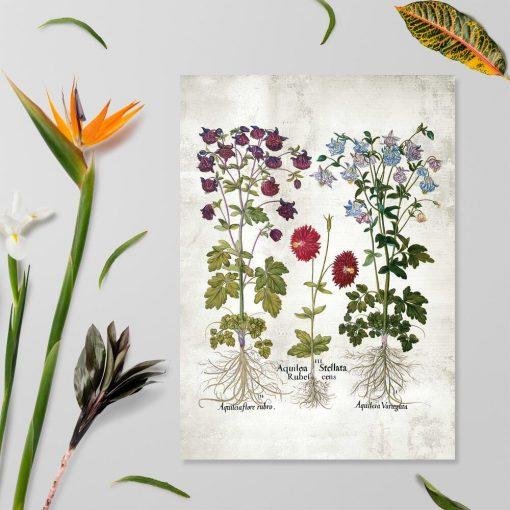 Plakat z motywem ogrodowych kwiatów