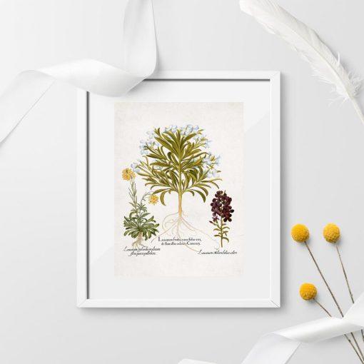Plakat z motywem roślin łąkowych do ozdoby szkoły