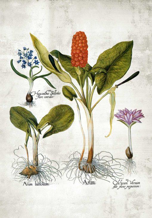 Plakat z motywem roślin wieloletnich