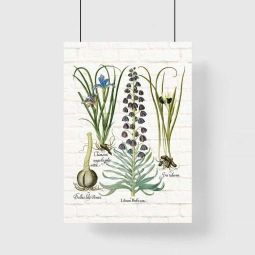 Plakat z motywem roślinnym w postaci irysów