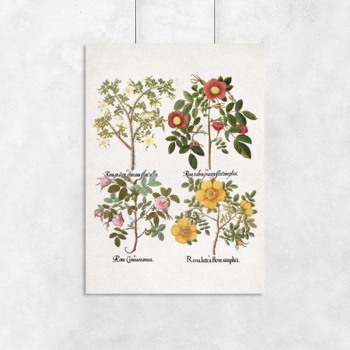 Plakat z motywem róż