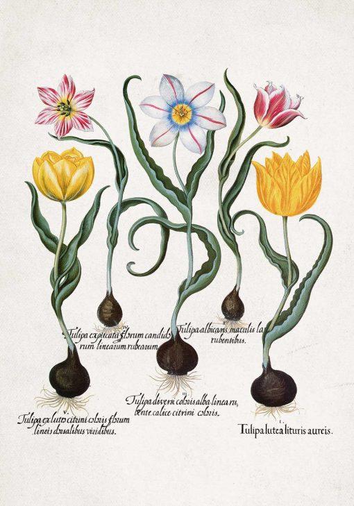 Plakat z motywem tulipanów do jadalni