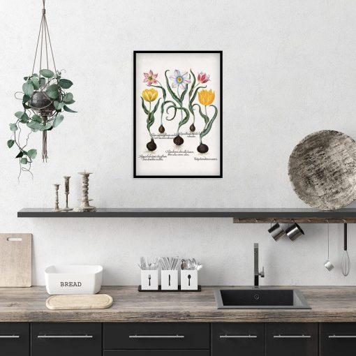Plakat z motywem tulipanów do kuchni