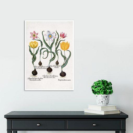 Plakat z motywem tulipanów na przedpokój