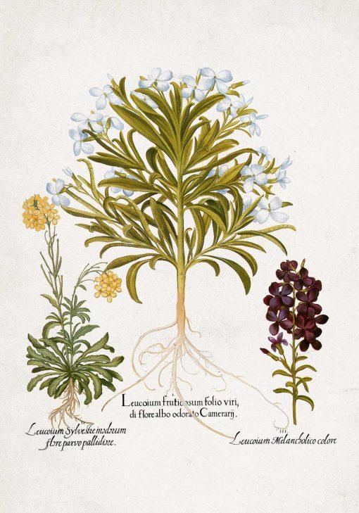 Plakat z nazwami łacińskimi roślin