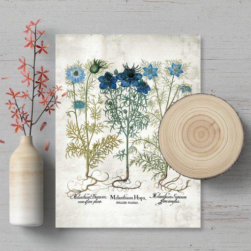 Plakat z niebieskimi kwiatami polnymi i łacuńskimi nazwami