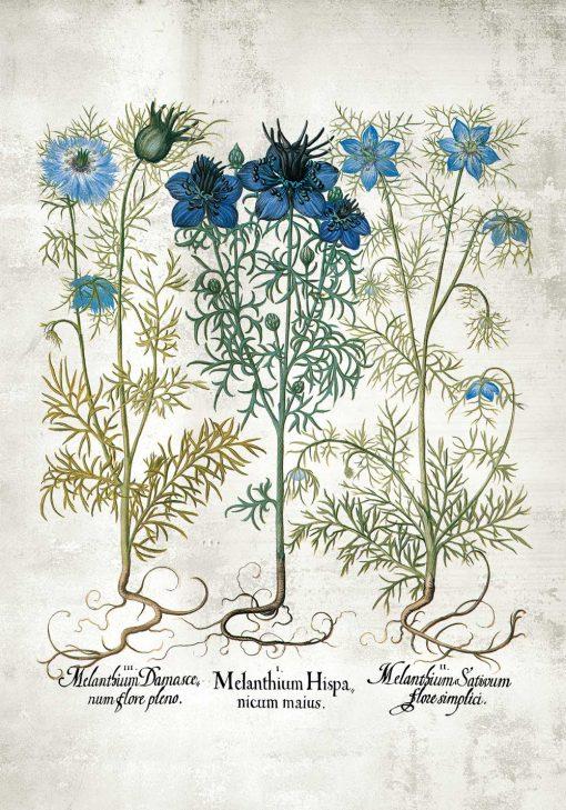 Plakat z niebieskimi kwiatuszkami i systemem korzeniowym