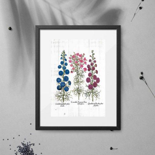 Plakat z odmianami roślin łąkowych